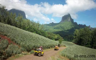 ATV Moorea Tours