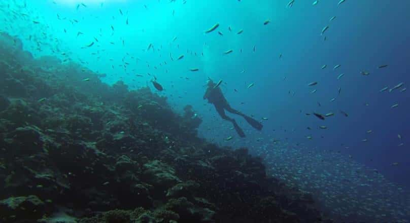 Blue Way Dive